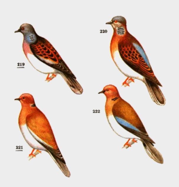 после рождения птицы красноярского края картинки и названия птиц символом твердости долговечности
